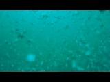Самый глубокий бассейн в мире - Nemo 33