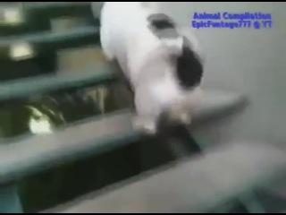 Самые смешные приколы с животными)